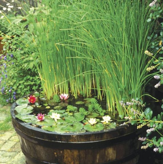 fish pond bowl ideas