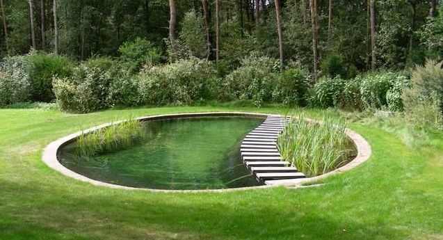 Fish pond ideas