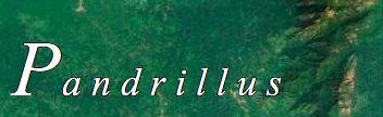 Pandrillus Web Link